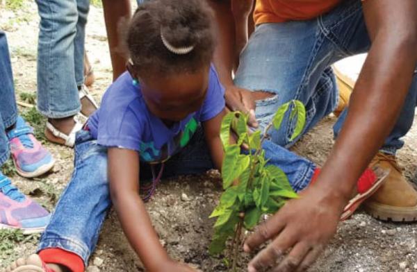 La SLDI participe à un projet de reforestation en plantant 100 arbres à Haïti !